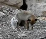 キツネと猫の不思議な関係