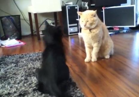 猫 vs. 猫 勝負は一瞬