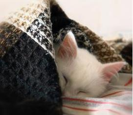 動物は1日何時間寝るのか?