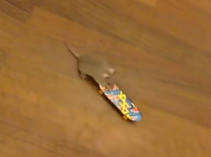 天才ネズミ