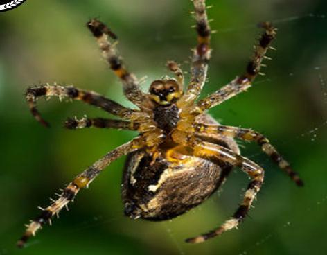 蜘蛛の巣ができるまでのTime-laps映像蜘蛛の巣ができるまでのTime-laps映像