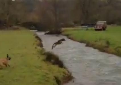 ワンコ、川をスーパージャンプ