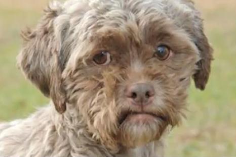里親募集中のワンコが人面犬だと話題に