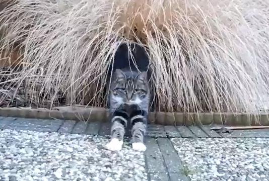隠れ家から出てきたネコ