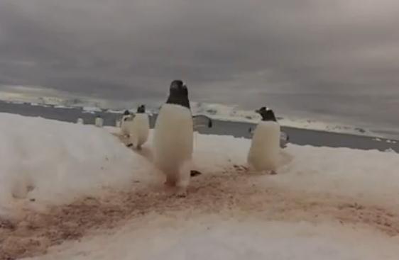 ペンギン道の交差点