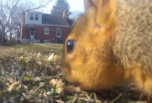 餌箱から落ちた餌を食べる小動物