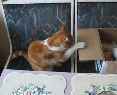 猫パンチの猛特訓するネコ