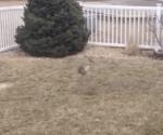 体当たりをジャンプして避けるウサギ