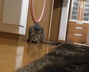 天才ゴールキーパー猫