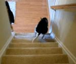 器用に?階段を登るワンコ
