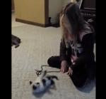女の子の動きを真似る子猫
