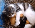 頑張る猫のお母さん