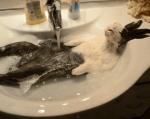風呂に入って極楽なウサギ