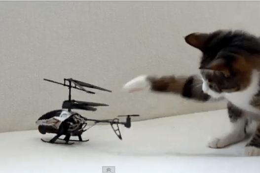 ネコ vs. ラジコンヘリ