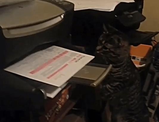 プリント作業をネコに手伝わせると…