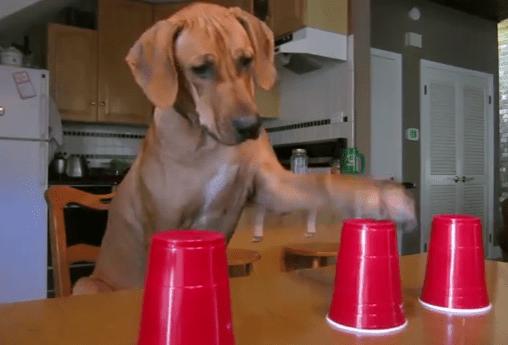 困り顔でおやつの入ったカップを当てるワンコ