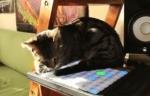 音楽を制作した猫