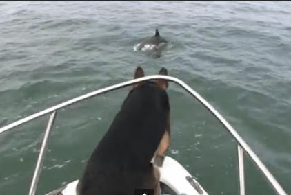 イルカを目の前で見たワンコが思わず…!