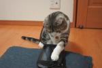 自分撮りに挑戦する猫