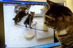 モニターに映る子猫に興味津々なニャンコ