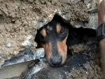 雨水排水路の奥深く入り込んだワンコの救助