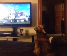 猫、シーリングファンめがけてジャンプ!