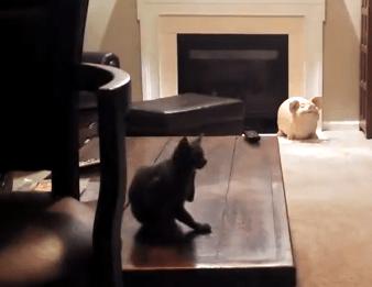 トレーニングを開始する飼い主、その時猫が!