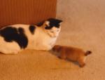 猫と遊ぶ活発なプレーリードッグ
