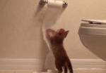 猫がバスルームが好きな理由、それは…