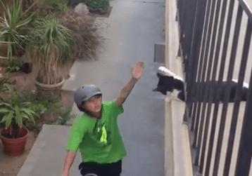社交的な猫は人との挨拶も手抜かりなくこなす