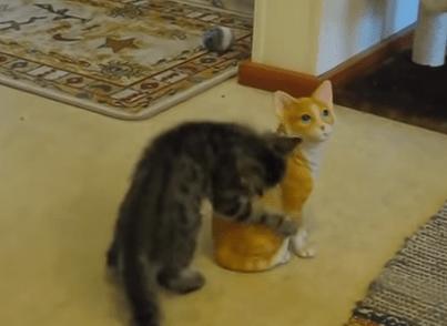 陶器の猫の置物に激しいライバル心を燃やす子猫