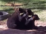 クマの仲良し三兄弟
