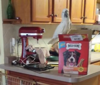 犬に餌を与えるオウム