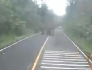 バイクで道路を走っていたらご機嫌斜めなゾウと遭遇