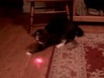 猫の頭にレーザーポインターを固定すると…