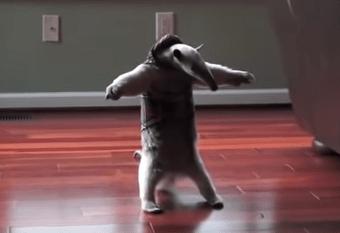カンガルーを威嚇するアリクイの映像