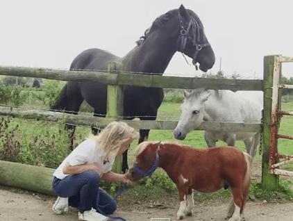 約56cmの超小型馬 inエセックス州の牧場