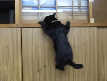 クリフハンガー猫