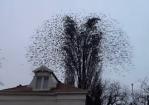 打ち上げ花火のように木から飛び立つ鳥の大群