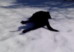 道具無しでウィンタースポーツを楽しむ方法を発見した犬