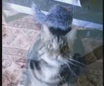 ガラス越しにおもちゃを狙う猫たちの映像
