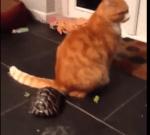 亀の執拗な攻撃にイライラするニャンコ