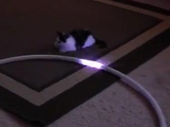 フラフープの光を追いかけるニャンコ