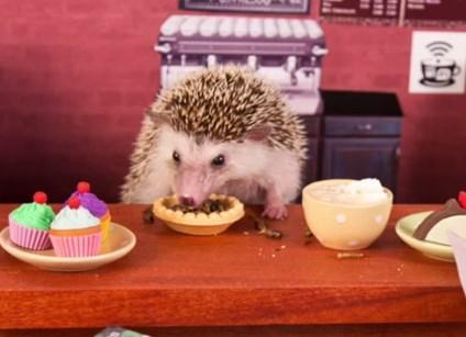 カフェで食事中のハリネズミとハムスター
