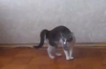 何かを感じ取った子猫の不思議な行動