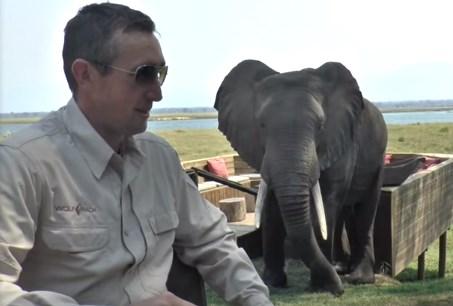 接近してきたゾウを怒らせてしまった観光客