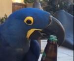 瓶ビールの栓を抜くオウム