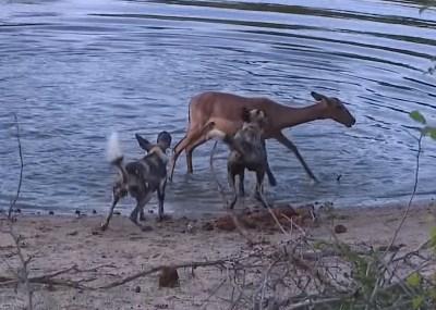 2015y 印象に残ったアフリカの野生動物映像10本