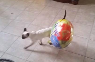 シャム猫と風船