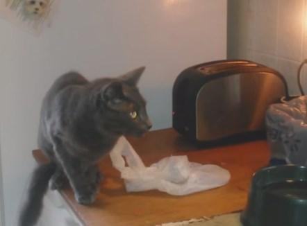 パンが焼けたと同時にニャンコが飛んだ!
